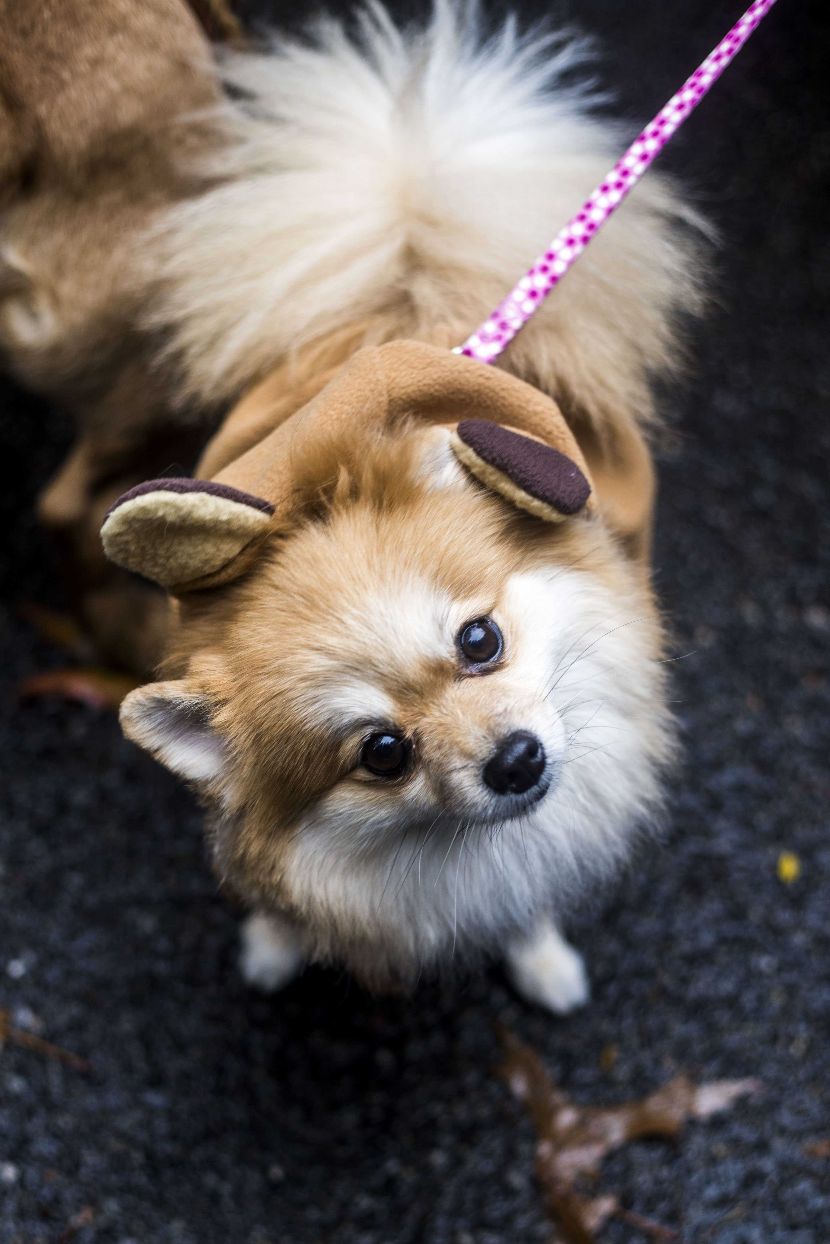 exposure | 2016 tompkins square halloween dog parade - washington