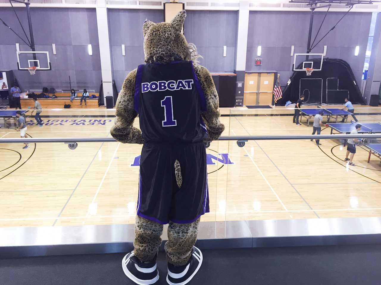 Unmasking the NYU Bobcat | Washington Square News